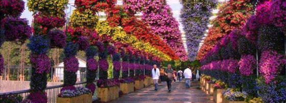 Магазин за цветя Ани