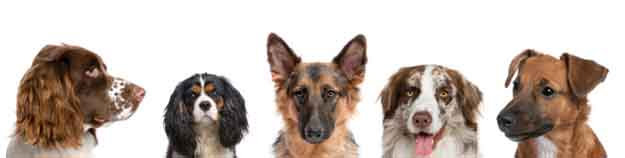Ветеринарен Кабинет Дружба