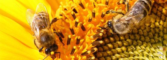 Пчеларски магазин Павликени