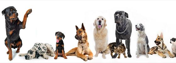 Ветеринарна клиника Вера Вет